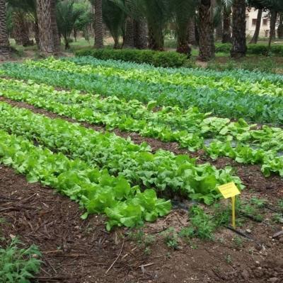 Agricultura ecológica Elche